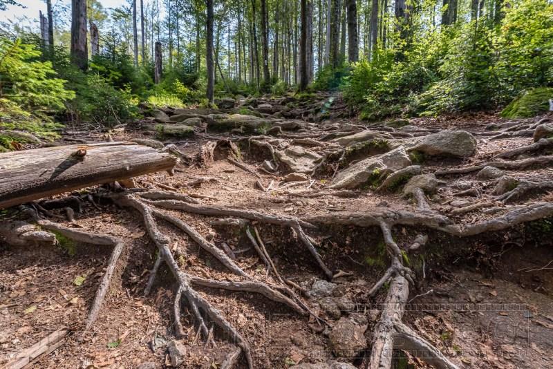 190822 Bayrischer Wald 0412