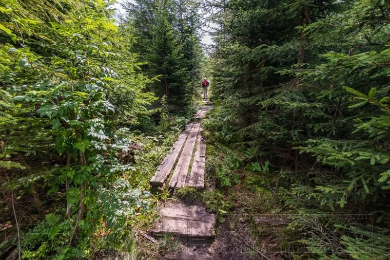 190822 Bayrischer Wald 1154