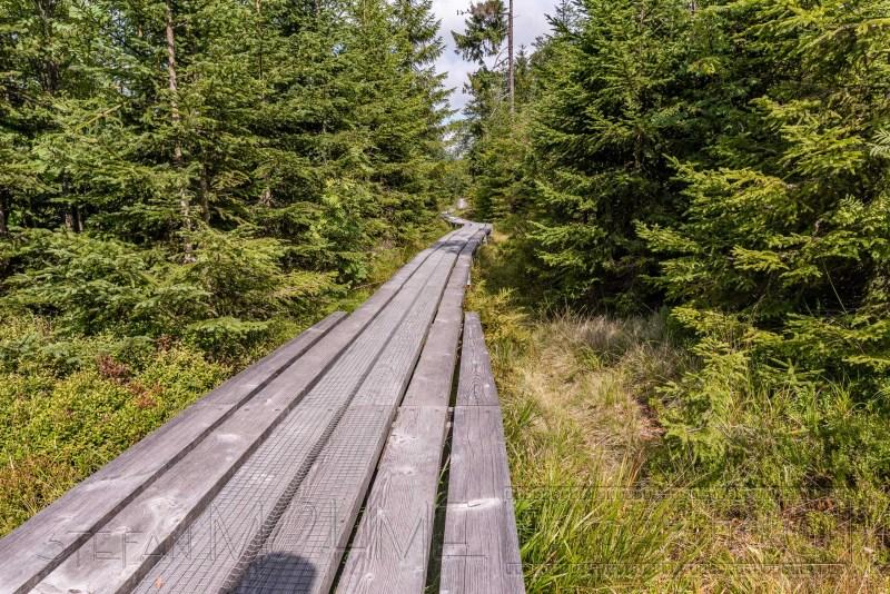190822 Bayrischer Wald 2137