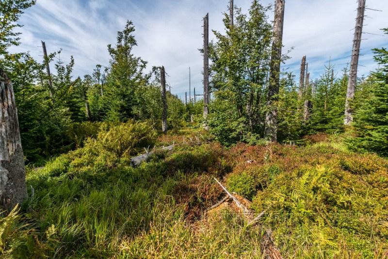190822 Bayrischer Wald 2206