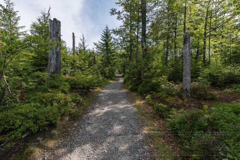 190822 Bayrischer Wald 2449