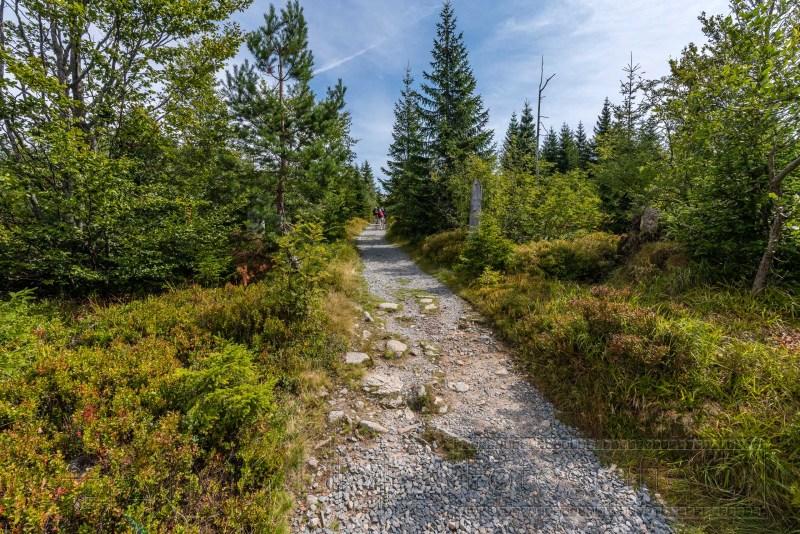 190822 Bayrischer Wald 3251