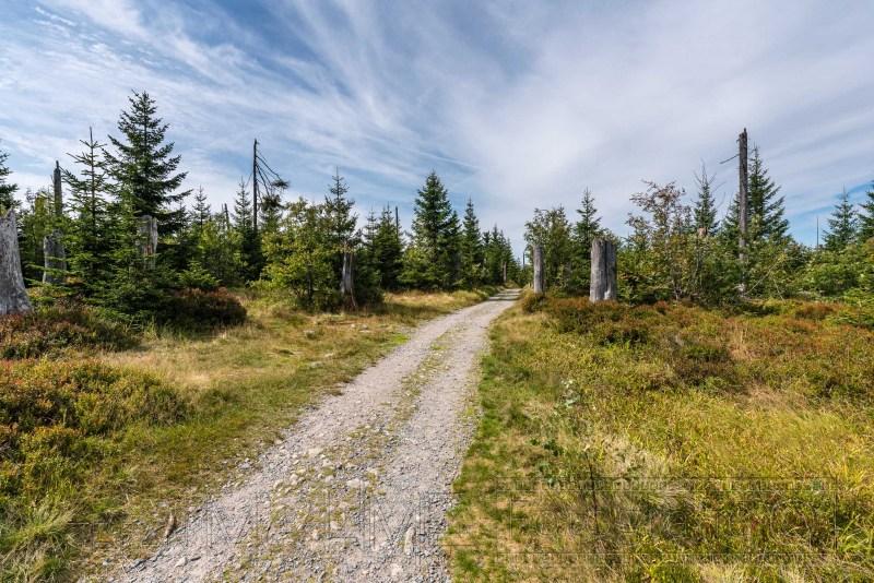 190822 Bayrischer Wald 3638