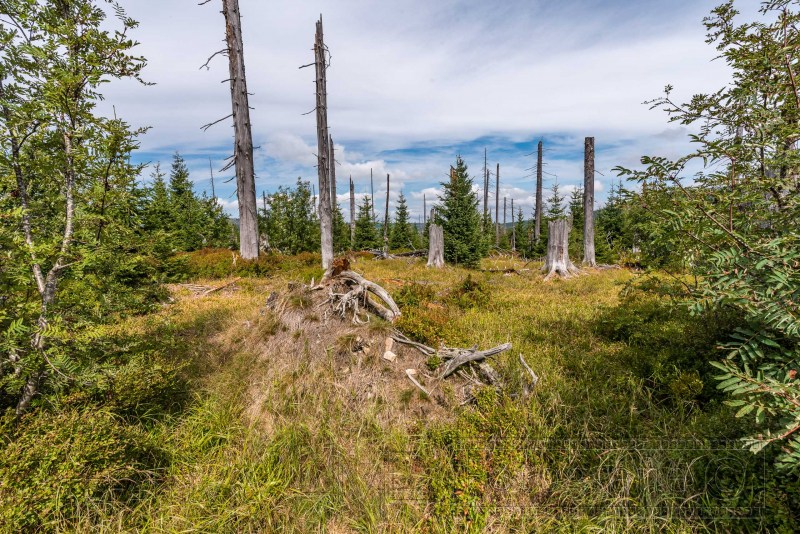 190822 Bayrischer Wald 3705
