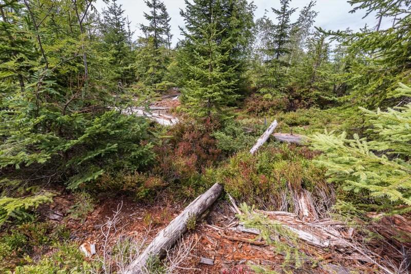 190822 Bayrischer Wald 4003