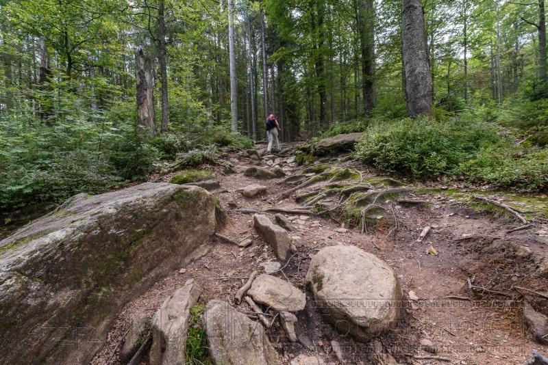 190822 Bayrischer Wald 4400