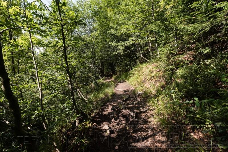 190822 Bayrischer Wald 5125