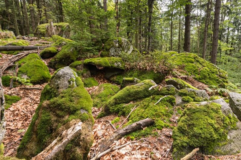 190822 Bayrischer Wald 5535