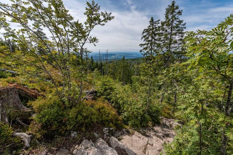 190822 Bayrischer Wald 5605