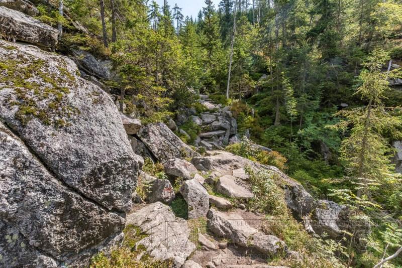 190822 Bayrischer Wald 5757