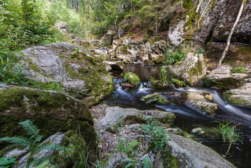 190823 Bayrischer Wald 0238
