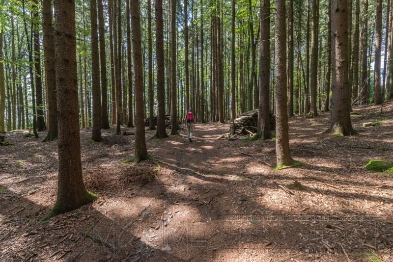 190823 Bayrischer Wald 1256