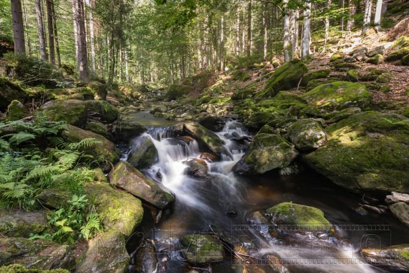 190823 Bayrischer Wald 2425