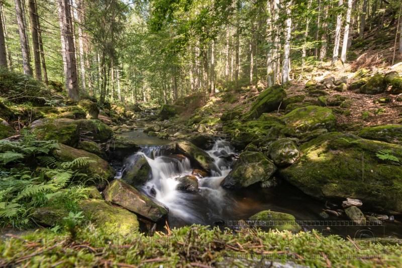 190823 Bayrischer Wald 2442