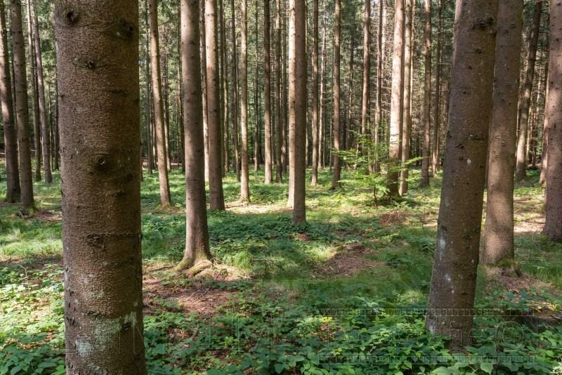 190823 Bayrischer Wald 4805