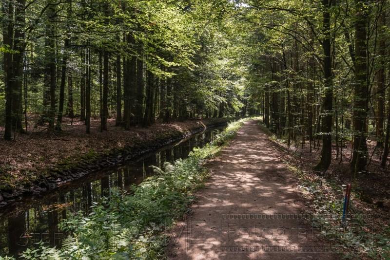 190823 Bayrischer Wald 4935