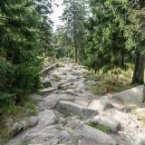 Harz6