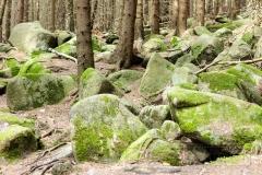 Harz17