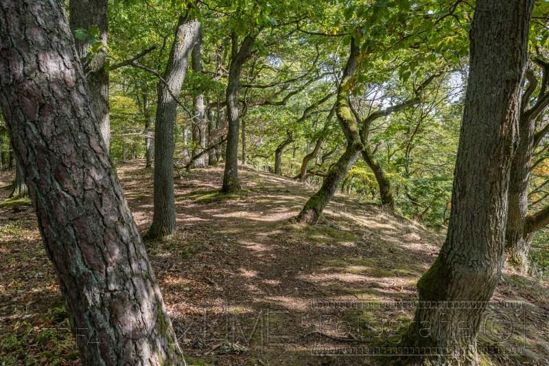 200917 NP Kewlerwald 0250
