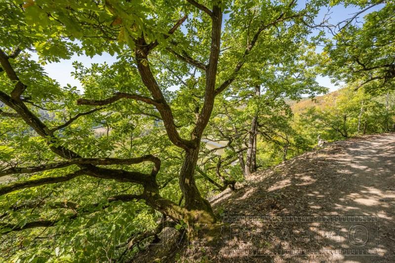 200917 NP Kewlerwald 1149