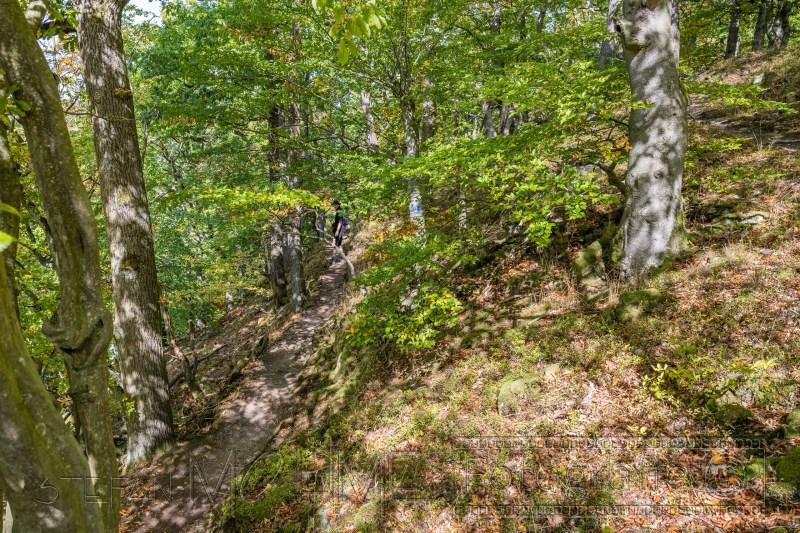 200917 NP Kewlerwald 3818