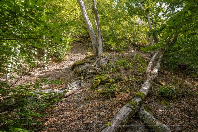 200917 NP Kewlerwald 4044