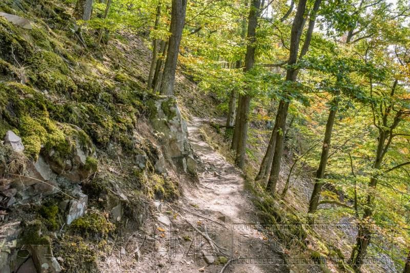 200917 NP Kewlerwald 5202