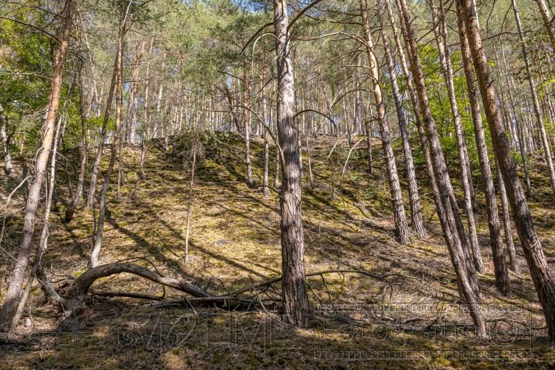 200919 NP Kewlerwald 0218