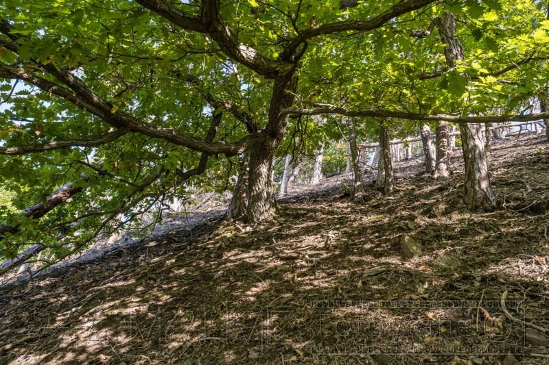 200919 NP Kewlerwald 1113