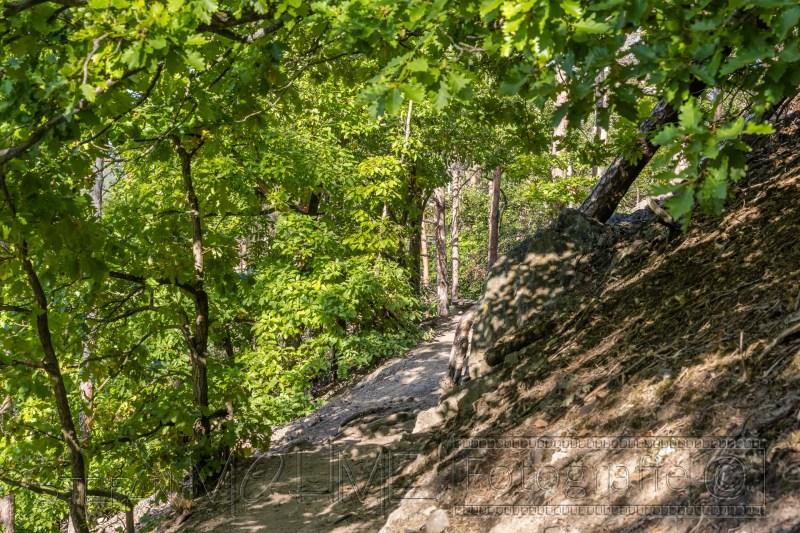 200919 NP Kewlerwald 1131