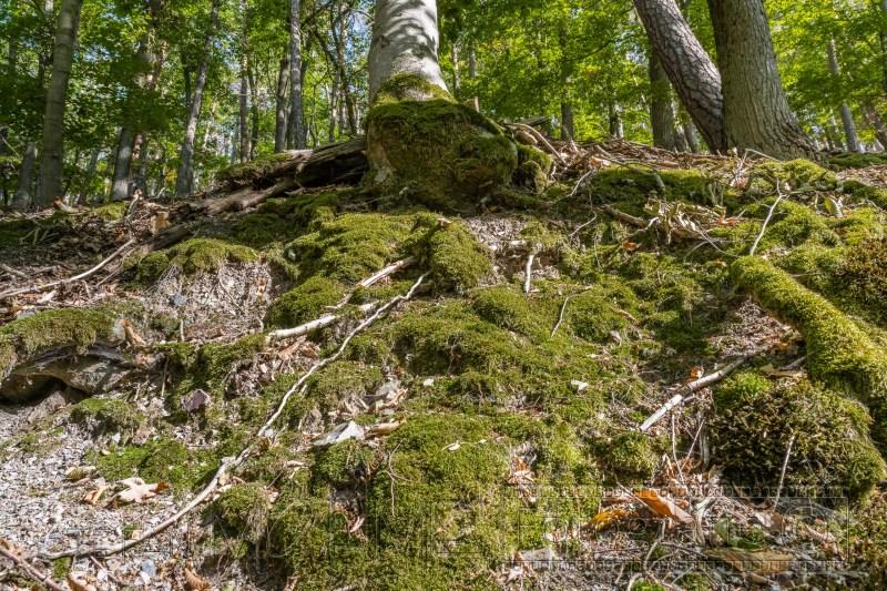 200919 NP Kewlerwald 2207