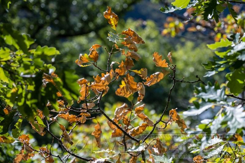 200919 NP Kewlerwald 2646