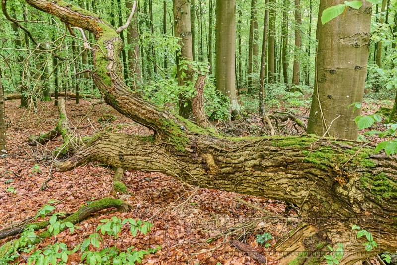 210520 Neuenburger Urwald 0534