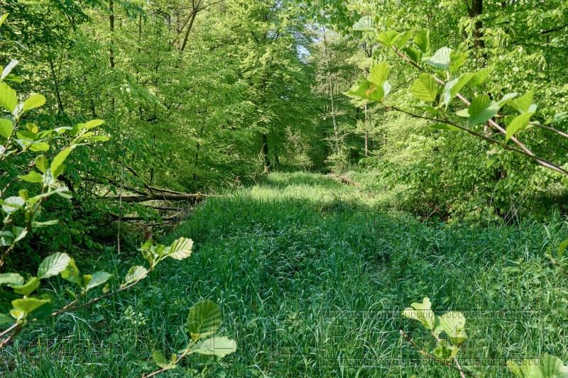 210520 Neuenburger Urwald 1049