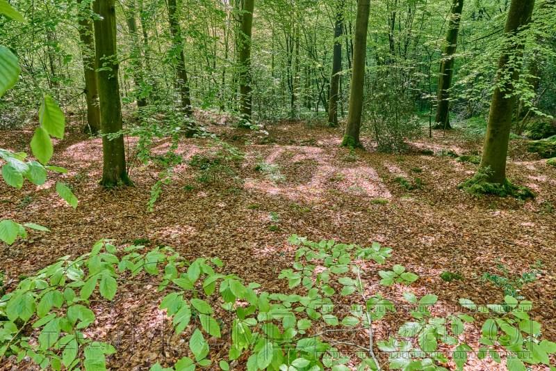 210520 Neuenburger Urwald 3554