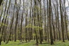 170428 Wald Hainich 0019