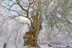 014_Hasbruch Schnee