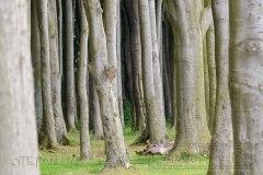 140601 Wald Nienhagen 5230