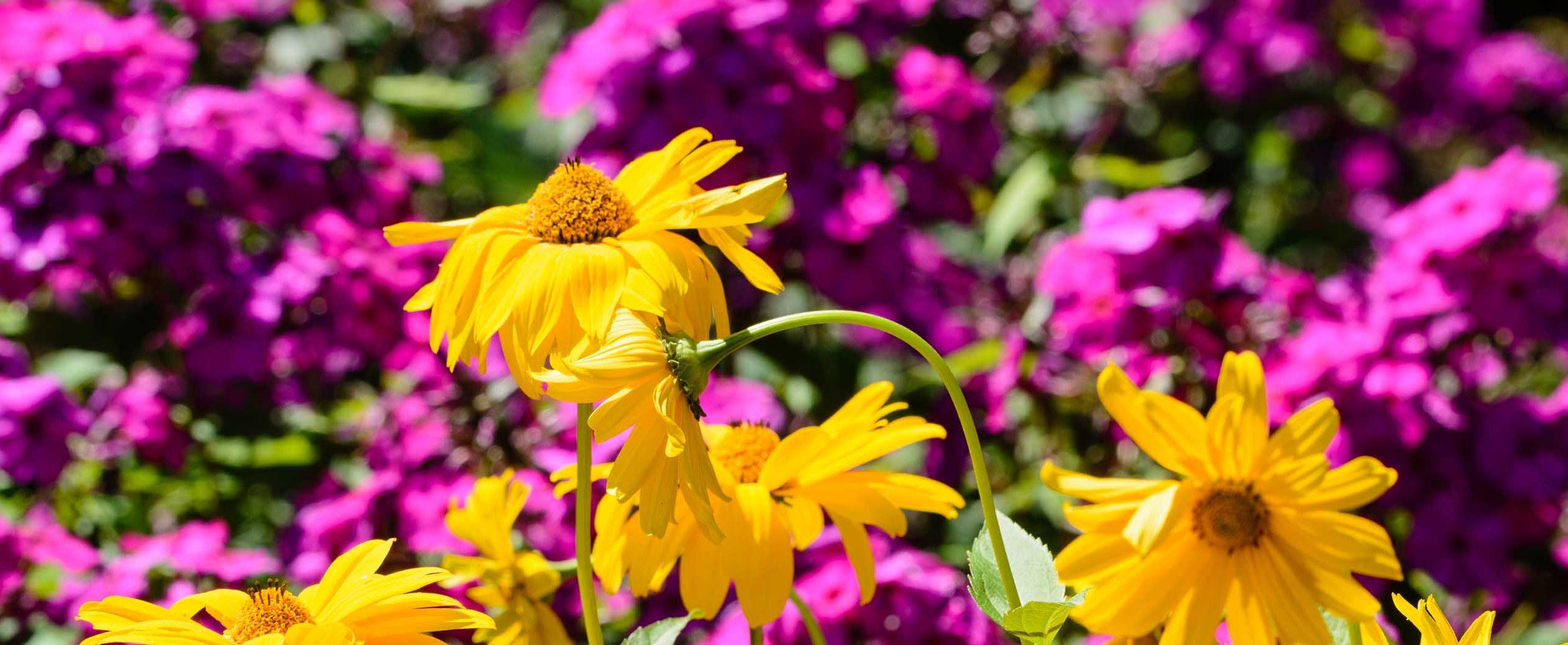 Arboretum Ellerhoop, Farben- und Blütenpracht!