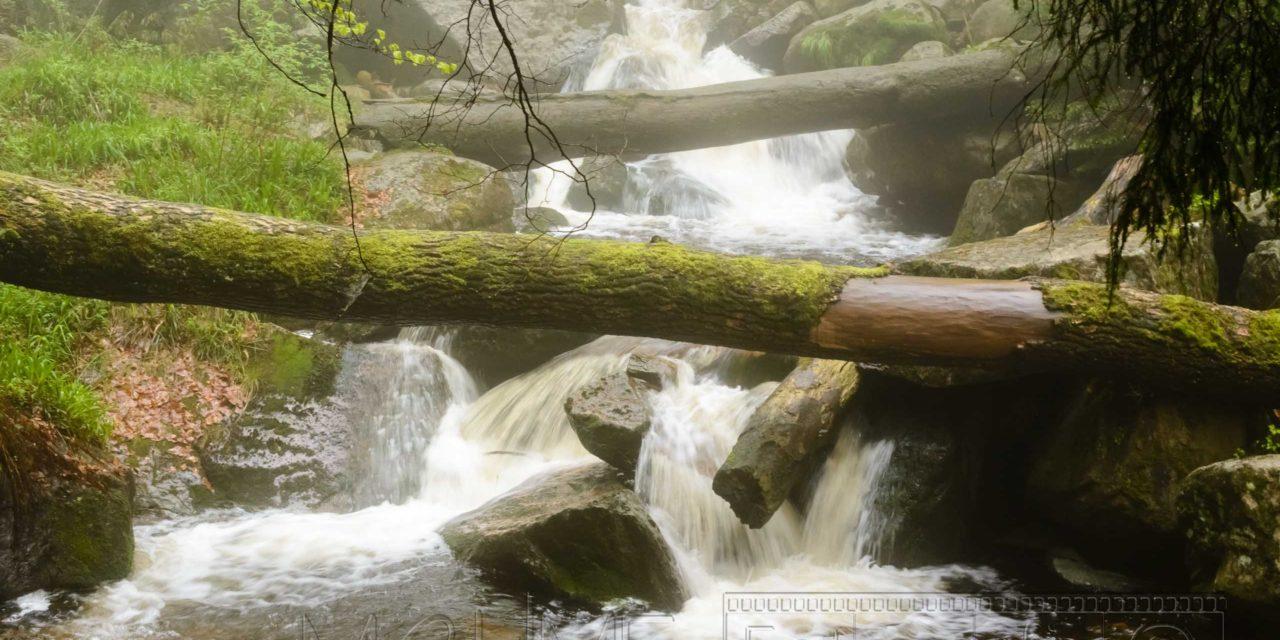 Bach,Fluss,Baumstamm