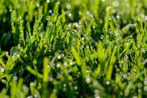 Nahaufnahme von feuchtem Gras