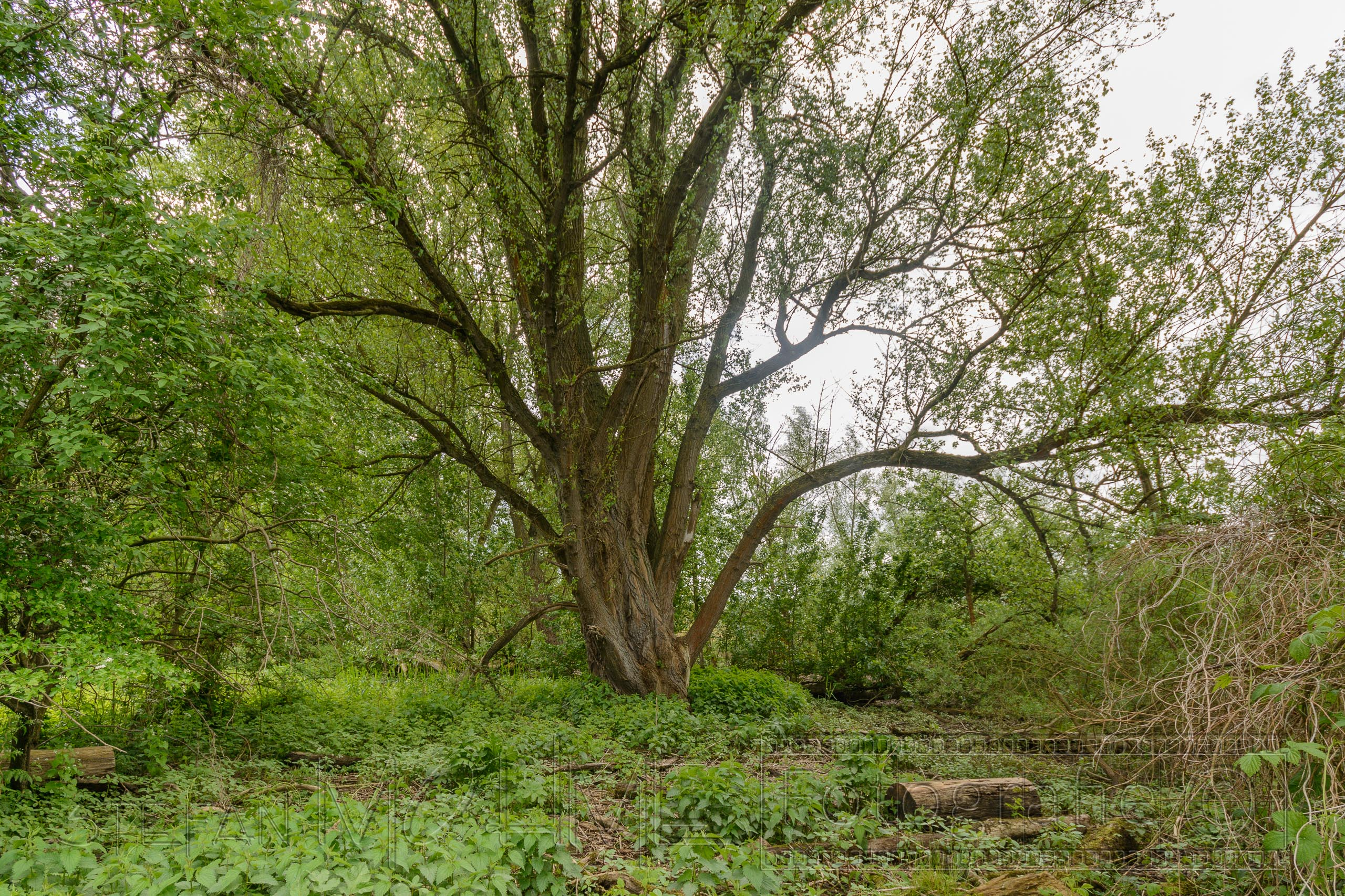 Biotop Hamburg naturschutzgebiet heuckenlock hamburg moorwerder stefanmohme