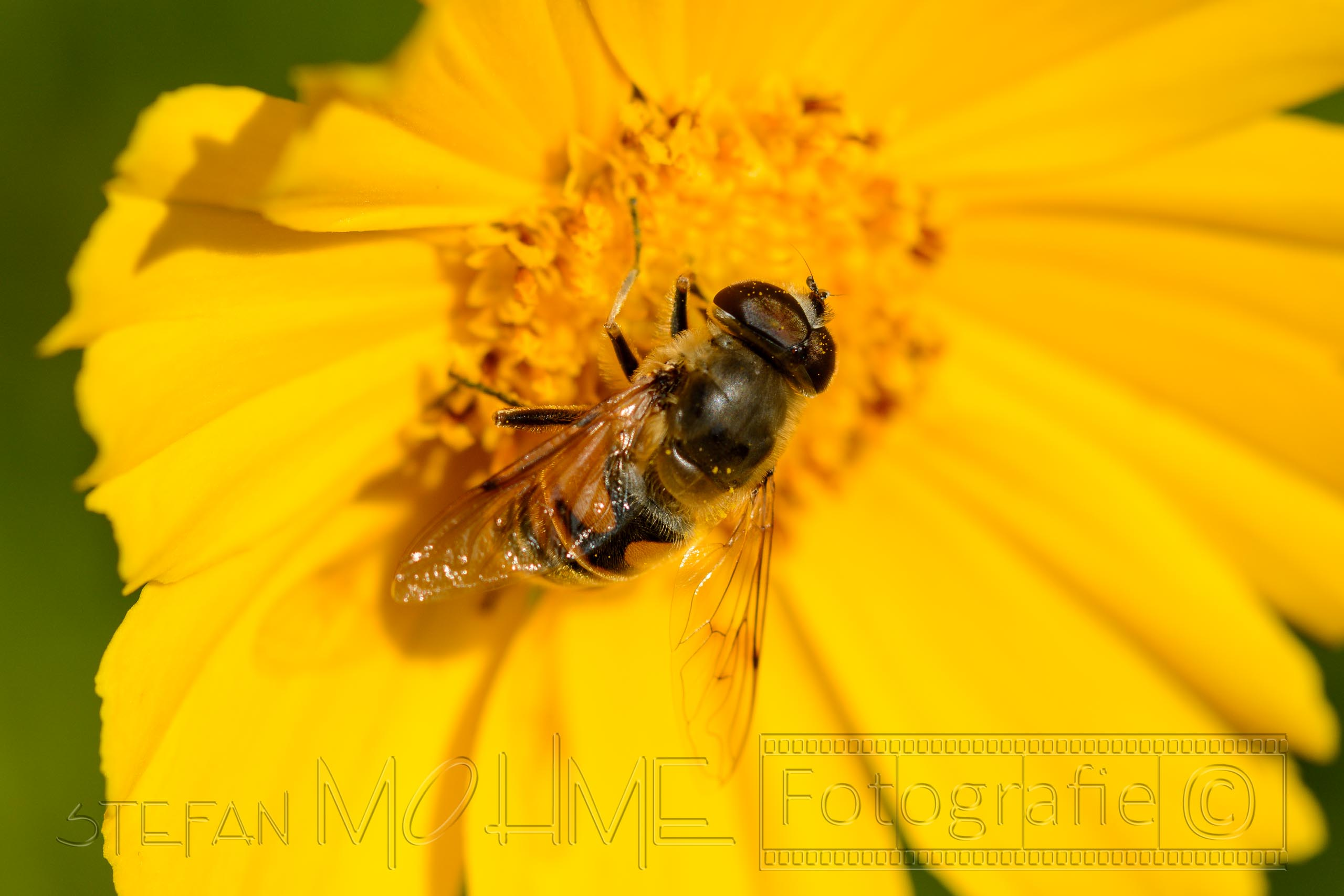 Welche Technik / Ausrüstung brauche ich für die Insektenfotografie?