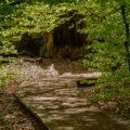 Weg im Urwald Sababurg
