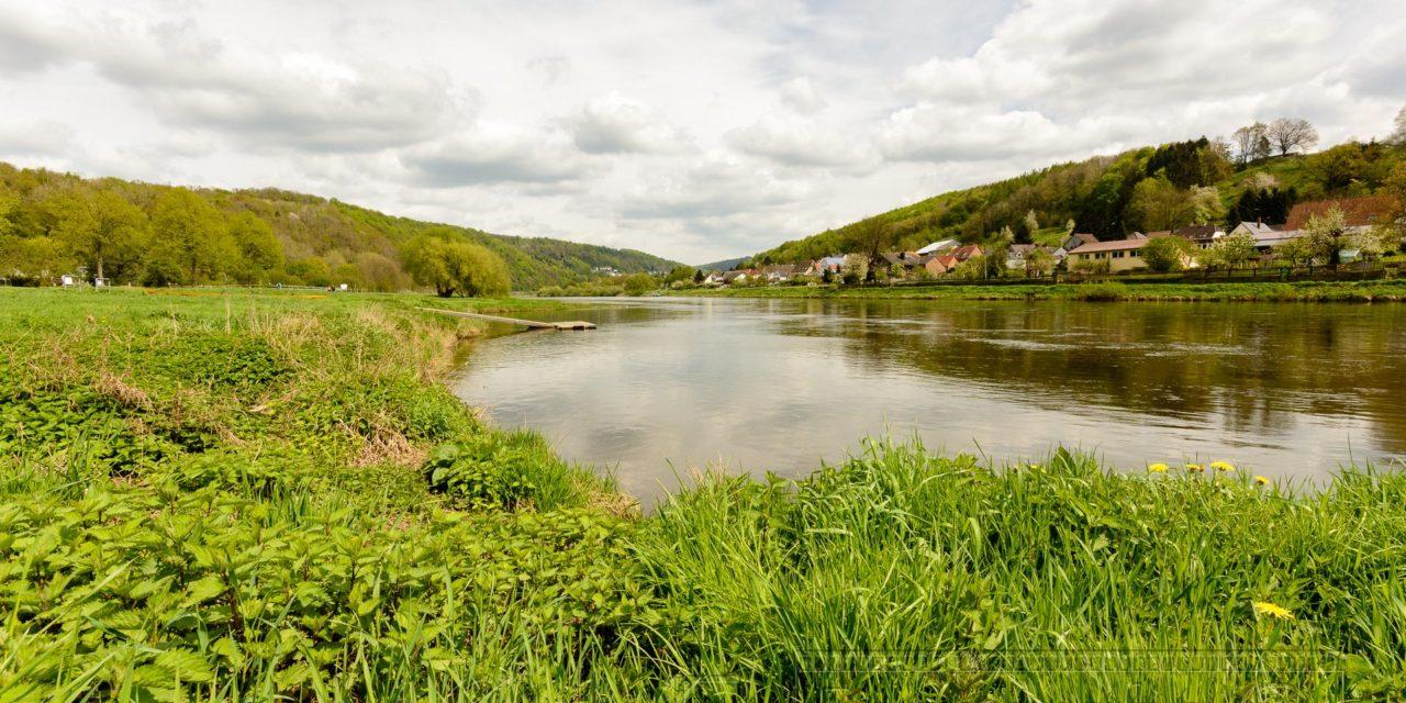 Weser,fluss,wasser,ufer,natur,pflanzen