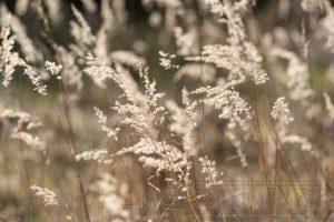 Wiese,Gegenlicht,Gras,Farn,Nahaufnahme
