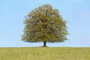 Baum,Himmel,blau,details,Wiese