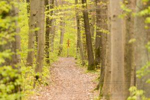 Wald,Baeume,greun,Blaetter,Laub,Schilder