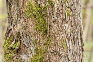 Baum,Rinde,Baumstamm,Struktur,Details