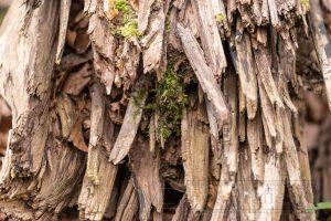 Holz,splitter,details,Struktur